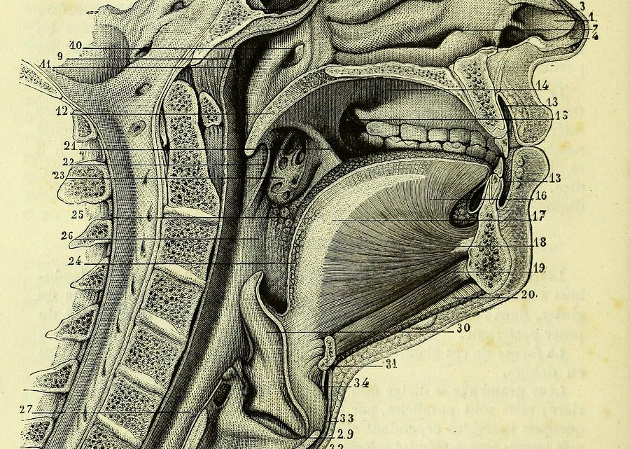 Anatomie de la bouche et des dents